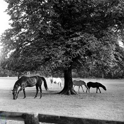 Horses at Langton Hall